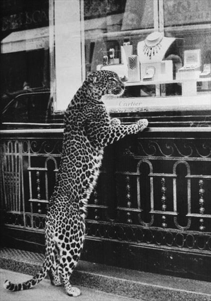 История легенды: «Cartier, ювелир королей, король ювелиров»